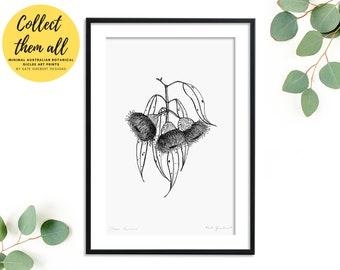 Australian Flower Eucalyptus Art Print