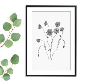 Australian Native Daisies Flower Art Print