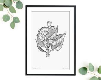 Australian Botanical Eucalyptus Art Print