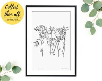 Australian Flannel Flowers Art Print