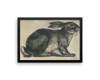 Framed photo paper poster. Bunny. Rabbit. Gift for. Nature. Animals. Nursery. Home Decor