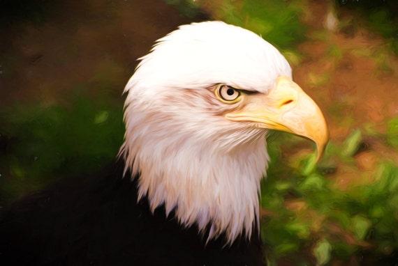 Bird Photography Bald Eagle Wall Art Nature Pennsylvania Etsy