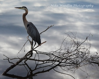 Great Blue Heron Photograph Photo DIGITAL download Nature Bird Country Water Reflection Poster Country Wall Art Fine Art Wall Hanging Blue