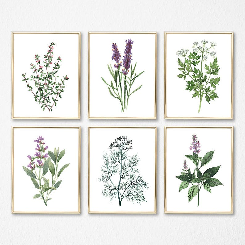 satz von 6 kräuter aquarell digital print instant art