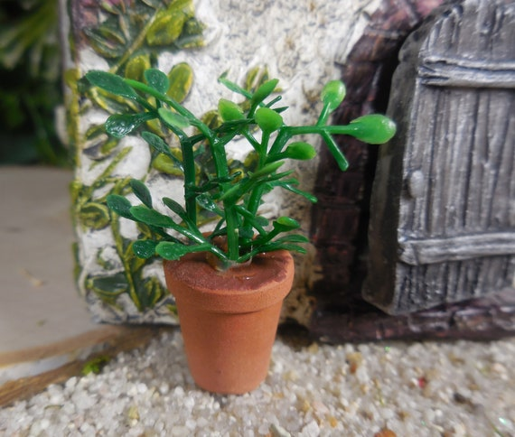 Genial Fairy Garden Miniature Plants Fairy Garden Leafy Plant In | Etsy