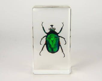 Green Shafer Beetle in Lucite