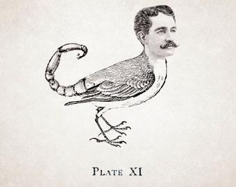 Hybird (12x18 print)