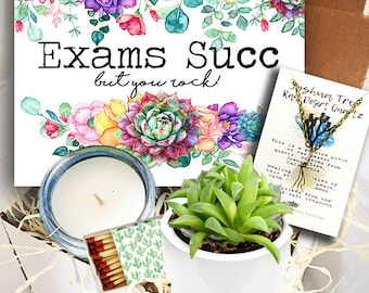 Finals Good Luck on your Exams Succulent in ceramic planter Gift box College Gift Box  Care Package Exams Succ