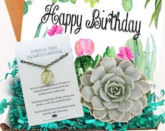 Live Succulent Mini Gift Box Happy Birthday