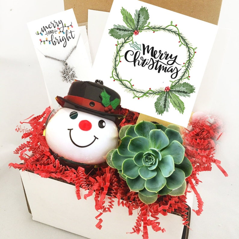 Christmas Succulent Gift.Christmas Succulent Gift Box Set Merry Christmas Box Succulent Care Package Send A Gift Happy Holidays Long Distance Gift