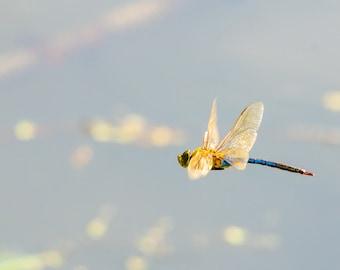 Dragonfly Caught Mid Flight Photograph Print