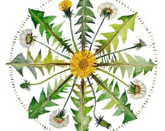 Dandelion Herbal Mandala Watercolor Print