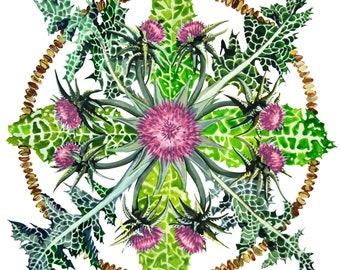 Milk Thistle Herbal Plant Flower Mandala Watercolor Print