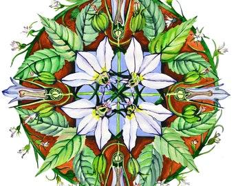 Lobelia Herbal Mandala Plant Flower Watercolor Print
