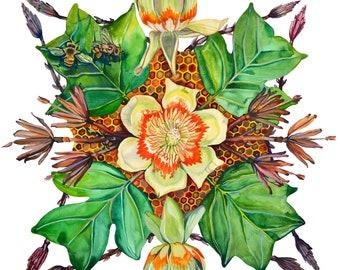 Tulip Poplar Herbal Mandala Watercolor Print