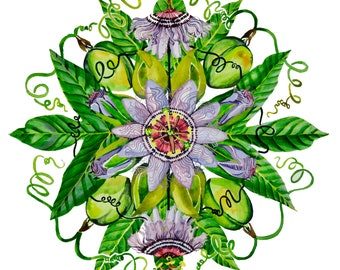 Passionflower Herbal Plant Flower Mandala Watercolor Print