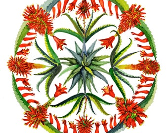 Aloe vera Watercolor Mandala Print
