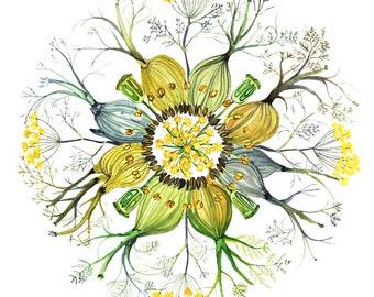 Fennel Herbal Plant Flower Mandala Watercolor Painting