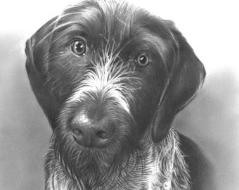 "Custom Hand Drawn Animal Portrait, 8"" x 10"", Illustration, Personalized Gift, Dog, Cat, Pet, Animal"