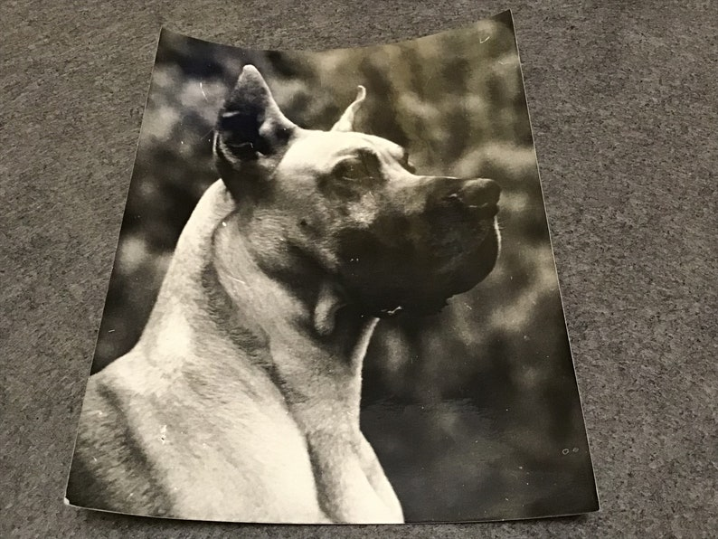 Four Big Vintage Soviet Black and White Dog Photographs.