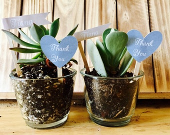 Succulent Bridal Shower Thank You Picks