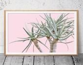 Succulent Wall Art, Aloe, Blush Pink Green, Scandi Wall Art, Succulent Photography, Contemporary Print, Prints, Botanical Art, Cactus Print