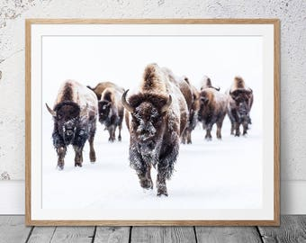 dakota bison print etsy
