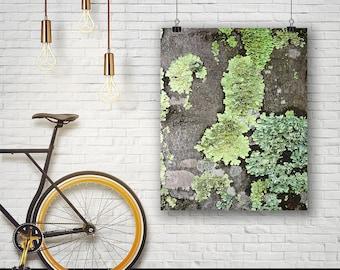 Lichen Print, Moss Print, Nature Print, Moss Photo, Botanical Art, Large Poster, Moss Photography, Instant Download, Wall Art, green, 117
