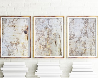 Scribbly Bark Prints, Bark Print, Set Of 3, Prints, Botanical Wall Art, Gum Tree Prints, Wall Art, Botanical Art, Eucalyptus Tree Art,Brown