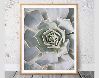 Cactus Print, Succulent Print, Botanical Art, Cactus Art, Modern Wall Decor, Geometric Art, Cactus Poster, Cactus Photography, Cacti, 112c