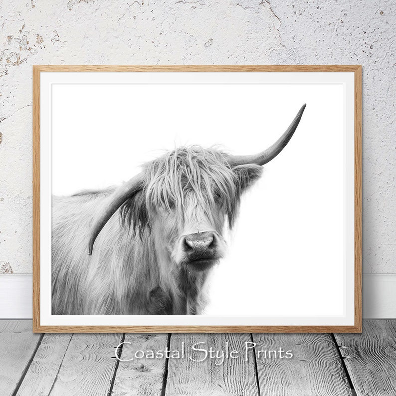 Highland Cow Wall Art Bison stampa camera da letto stampe | Etsy