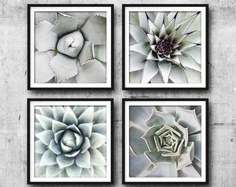 Cactus Print, Set Of 4 Prints, Cactus Set, Succulent Print, Botanical Art, Cacti, Wall Art, Wall Decor, Prints, Cactus, Print, Australia