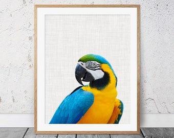 Parrot Print, Parrot Wall Art, Tropical Bird Print, Bird Print, Macaw Parrot Print, Animal Print, Wall Art, Poster, Parrot Photography, 148c