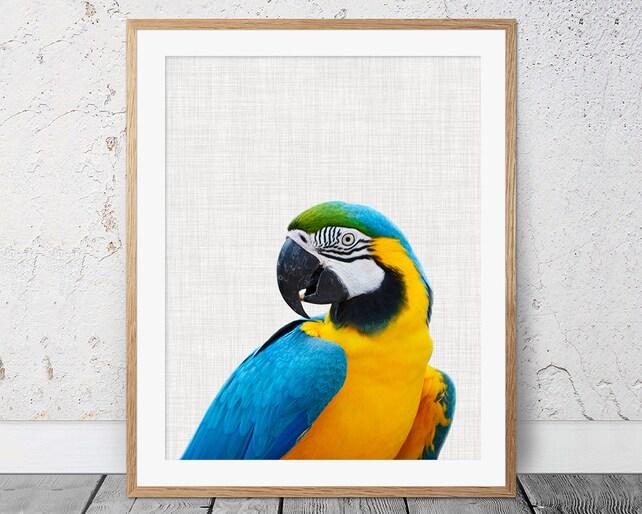 Parrot Print Parrot Wall Art Tropical Bird Print Bird   Etsy