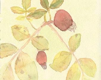 Original Watercolor Painting - Wild Flowers in the Rockies