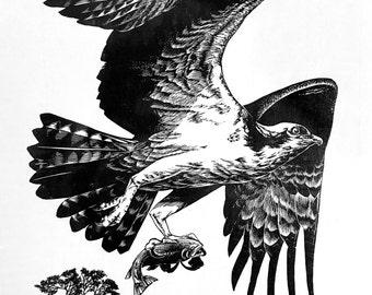 Osprey wood engraving