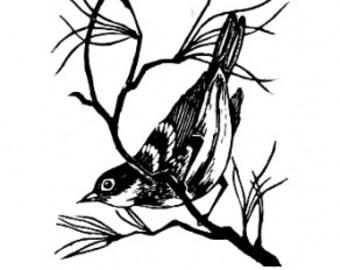 Audubon's Warbler, wood engraving