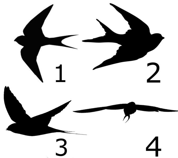 Swallow Stencil Reusable Different Sizes And Styles 7 Mil Etsy