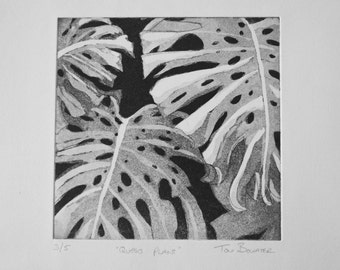 """Monstera Cheese Plant Etching """"Queso Plant"""""""