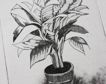 Botanical Palm Plant Etching with Aquatint