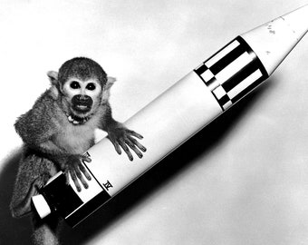 "Monkey ""Miss Baker"" With a Model Jupiter Vehicle - 8X10 or 11X14 NASA Photo (BB-115)"