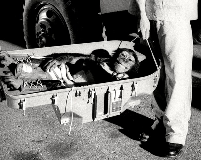 Ham the Astrochimp Smiles After Successful Test Flight - 5X7, 8X10 or 11X14 NASA Photo (OP-009)