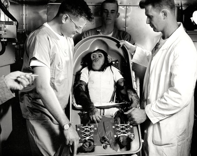 Ham the Chimp in Bio-Pack Couch for Suborbital Test Flight - 8X10 or 11X14 Photo (BB-171)