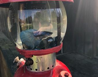 Betta fish aquarium