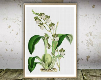 Vintage Orchid Art, Orchid Art, Orchid Print, Flowers Art Print, Vintage Flowers, Botanical Print, Orchid Wall Art Print, Instant Download.