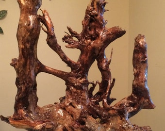 Tree Root  Embrace of Nature's. every detail has a story. Great Conversation Piece