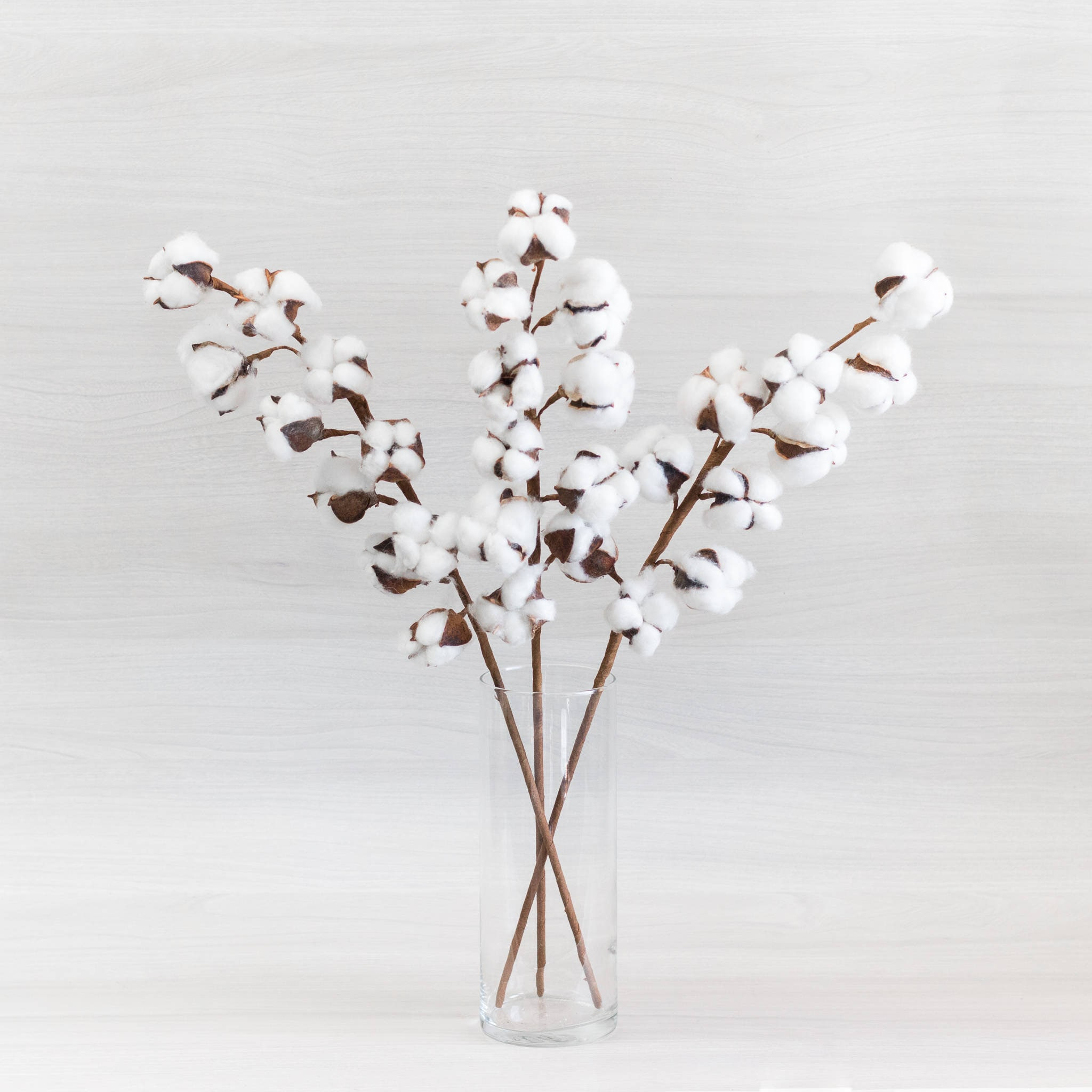 Set of 2 -OR- 3 stems 23.5\
