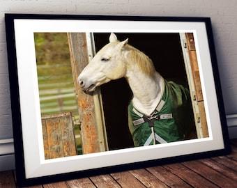White horse photo print. Horse print Horse wall art. Horse photography. Horse decor. Horse printable. Animal photography. Ranch photo