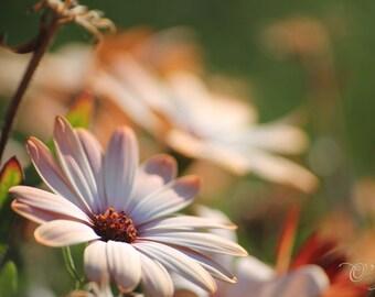 Fleurs délicates dans le vent photographie - claire marron orange beige rose rouille couleur décoration chambre d'enfant nature rustique 5 x 7 8 x 12 10x10