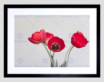 Nature Photo Red Tulip Flower Petal Poster Art Print Picture FEBB186B